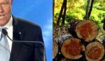 """Desfișările ilegale. Iohannis denunță un fake news marca PSD și spune că se va implica pentru a proteja pădurile: """"Datele sunt de speriat""""!"""