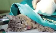 Botox și lifting facial pentru câini și pisici! Ultima fiță a camarilei ayatollahilor criminali: operațiile estetice pentru animalele de companie, la mare căutare în sărăcăciosul Iran