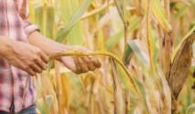 Producția agricolă a Europei riscă să se PRĂBUȘEASCĂ fără muncitorii români! Pandemia COVID-19 și criza lucrătorilor sezonieri