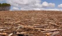 """Altă MINCIUNĂ pesedistă! Guvernul """"crește"""" pădurea pe hârtie, în timp ce arborii sunt tăiați MASIV"""