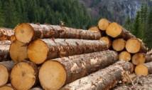 PETIȚIE: Diaspora Europeană cere interzicerea totală a exportului de materie primă lemnoasă