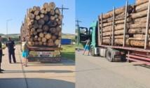 """Încă o bătălie câștigată de o grupare civică contra mafiei lemnului: """"S-a deschis dosar penal pentru furt de masă lemnoasă"""""""