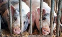 La inițiativa stângii ecologiste, CE e pe cale sa schimbe radical zootehnia europeană. Interzicerea creșterii animalelor în cuști ar putea închide multe ferme și va crește abrupt prețul cărnii în Europa