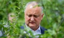 Veselie și șampanie la PSRM și la Moscova: O băbuță i-a ghicit în ouă lui Dodon că va câștiga la prezidențiale. Minunea de la Etulia