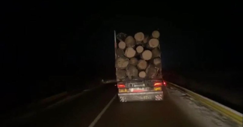 lemne1